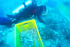 Local divers recovering silver coins and porcelain